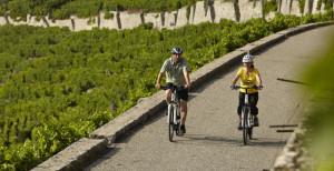 Radfahrer-Weinberg_c_TMBW_700x360