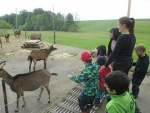 Schulkindergarten Besuch auf dem Albert-Rapp-Hof 21 05 2015 12